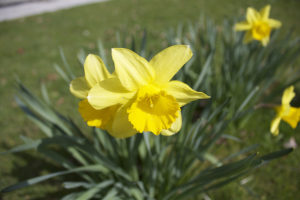 Virágküldés Debrecen